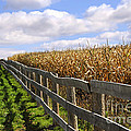 Rural Landscape With Fence by Elena Elisseeva