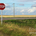 Rural stop sign on the prairies  Print by Sandra Cunningham