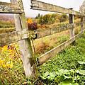 Rustic Landscapes - Broken Fence by Gary Heller