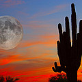 Saguaro Full Moon Sunset by James BO  Insogna