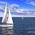 Sailboats At Sea by Elena Elisseeva