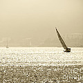 Sailing In San Diego Harbor by Artist and Photographer Laura Wrede