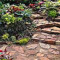 Sally's Garden by Nancy Harrison