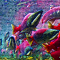 Salmon Run - Square - 2013-0103 by Wingsdomain Art and Photography