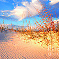 Sand Dune And Sea Oats At Sunset by Thomas R Fletcher
