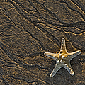 Sand Prints And Starfish  by Susan Candelario