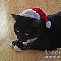 Santa Kitty by Cheryl Young