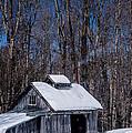 Sap House II by Alana Ranney