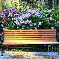 Savannah Bench by Carol Groenen