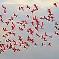 Scarlet Sky by Tony Beck