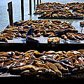 Sea Lions At Pier 39  by Garry Gay