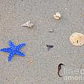 Sea Swag - Dark Blue by Al Powell Photography USA