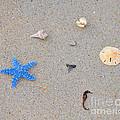 Sea Swag - Light Blue by Al Powell Photography USA