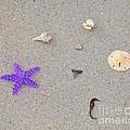 Sea Swag - Purple by Al Powell Photography USA