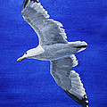 Seagull In Flight by Crista Forest