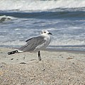 Seagulls At Fernandina 2 by Cathy Lindsey