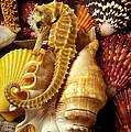 Seahorse Among Sea Shells by Garry Gay