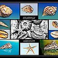 Seashell Collection by Kaye Menner