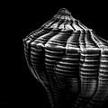 Seashell On Black by Bob Orsillo