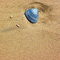 Seashell by Venus