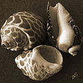 Seashells Spectacular No 1 Print by Ben and Raisa Gertsberg