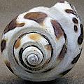 Seashells Spectacular No 2 by Ben and Raisa Gertsberg
