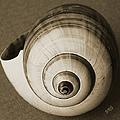 Seashells Spectacular No 25 by Ben and Raisa Gertsberg
