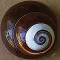 Seashells Spectacular No 26 by Ben and Raisa Gertsberg