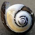 Seashells Spectacular No 3 by Ben and Raisa Gertsberg