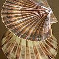Seashells Spectacular No 54 by Ben and Raisa Gertsberg