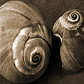 Seashells Spectacular No 6 by Ben and Raisa Gertsberg