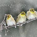 Season's Greetings by Lori Deiter
