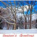 Season's Greetings by Madeline Ellis