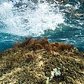 Seaweed by Science Photo Library