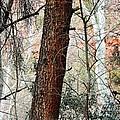 Sedona Layers by Todd Sherlock
