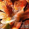 Seeds II by Yanni Theodorou