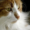 Serious Gato 1 by Julie Palencia
