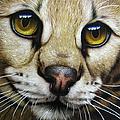 Serval by Jurek Zamoyski