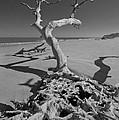 Shadows At Driftwood Beach by Debra and Dave Vanderlaan