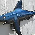 Shark Blue Bull Shark by Robert Blackwell