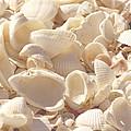 She Sells Seashells by Kim Hojnacki