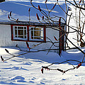 Shed In Winter by Sophie Vigneault