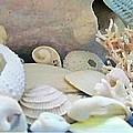 Shells In Pastels by Danielle  Parent