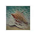 Shells Triptych 2 by Don Young