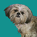 SHIH TZU ON TURQUOISE Print by Dale Moses