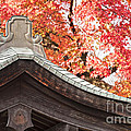 Shrine Roof And Autumn Leaves Arashiyama Kyoto by Colin and Linda McKie