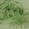 Shy Puppy Print by Christy Brammer