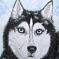 Siberian Husky by Yvonne Johnstone