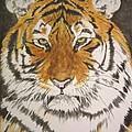 Siberian Tiger by Regan J Smith