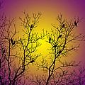 Silhouette Birds by Christina Rollo